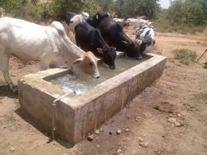 Mwikali's well2